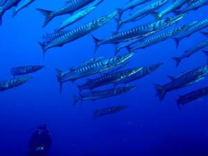 ΚΕΡΚΥΡΑ: Dive Easy Scuba Diving
